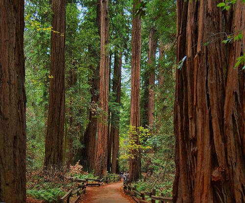 redwood-national-forest