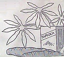 Where Do Tapioca Balls Come From